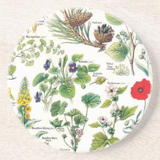 Dessous De Verre En Grès Illustrations botaniques