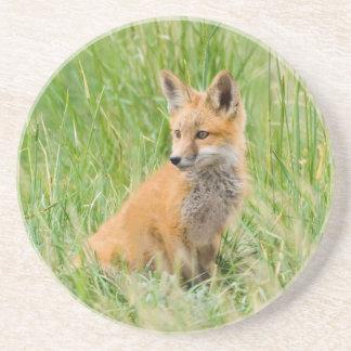 Dessous De Verre En Grès Kit de Fox rouge dans l'herbe près du repaire