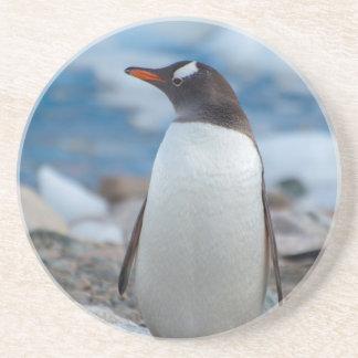 Dessous De Verre En Grès L'Antarctique. Port de Neko. Pingouin de Gentoo