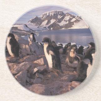 Dessous De Verre En Grès L'Antarctique, poussins de pingouin d'Adelie