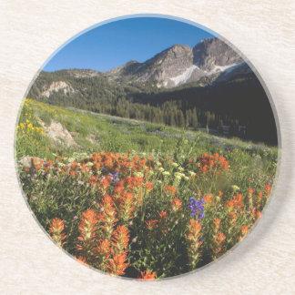 Dessous De Verre En Grès Les Etats-Unis, Utah, réserve forestière