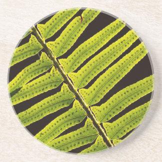 Dessous De Verre En Grès Les Etats-Unis, Washington, parc national