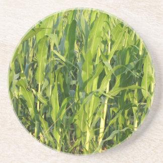 Dessous De Verre En Grès Les plantes de maïs vert se développent en été