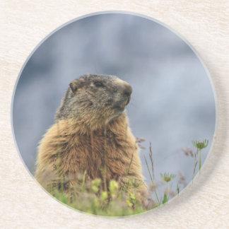 Dessous De Verre En Grès marmotte sur le pré alpin