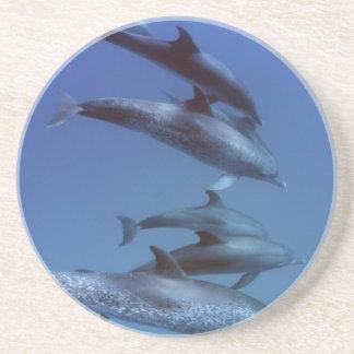 Dessous De Verre En Grès Océan atlantique a repéré des dauphins. Bimini,