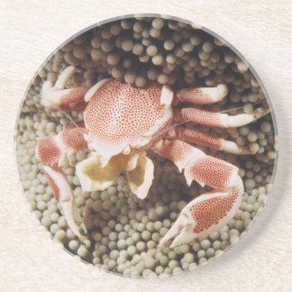 Dessous De Verre En Grès Océan Indo-Pacifique, plan rapproché de crabe