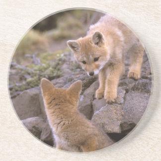 Dessous De Verre En Grès Paires sud-américaines de Fox gris (griseus de