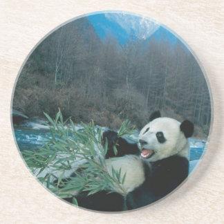 Dessous De Verre En Grès Panda mangeant le bambou par la berge, Wolong, 2