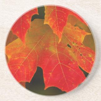 Dessous De Verre En Grès Parc d'état d'Itasca, couleurs 2 d'automne
