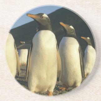 Dessous De Verre En Grès Pingouins de Gentoo, Pygoscelis Papouasie),