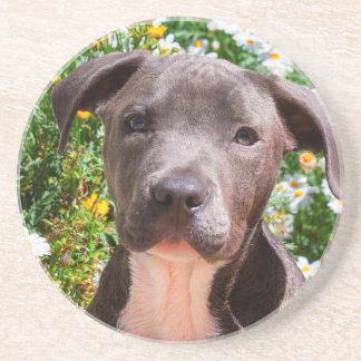 Dessous De Verre En Grès Portrait de chiot de bull-terrier du Staffordshire