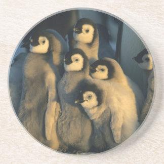 Dessous De Verre En Grès Poussins de pingouin d'empereur dans la garderie,