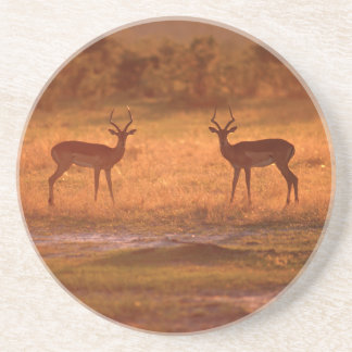 Dessous De Verre En Grès RAM d'impala (Aepyceros Melampus) au coucher du