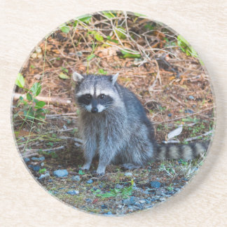 Dessous De Verre En Grès Raton laveur à l'état du parc WA de défi de point