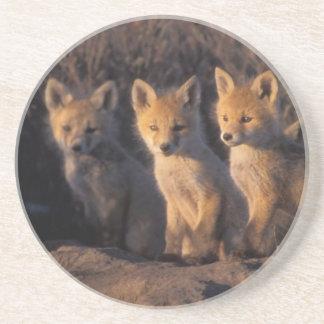 Dessous De Verre En Grès renard rouge, vulpes de Vulpes, kits en dehors de