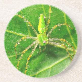 Dessous De Verre En Grès Rosée sur une araignée verte de Lynx