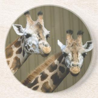 Dessous De Verre En Grès Seattle, Washington. Deux girafes