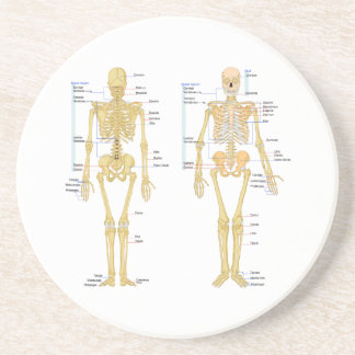 Dessous De Verre En Grès Squelette humain marqué diagramme d'anatomie