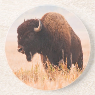 Dessous De Verre En Grès Troupeau de bison américain (bison de bison) dans