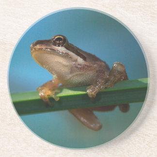 Dessous De Verre En Grès Une grenouille d'arbre de bébé