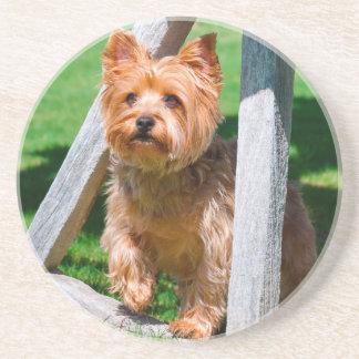 Dessous De Verre En Grès Yorkshire Terrier se tenant dans des roues