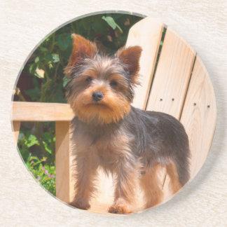 Dessous De Verre En Grès Yorkshire Terrier se tenant sur la chaise en bois