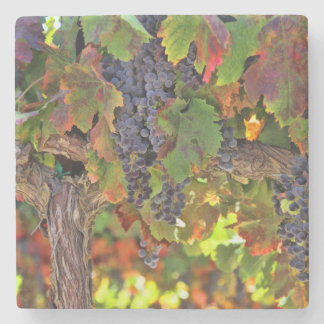 Dessous-de-verre En Pierre Dessous de verre de vignoble de pays de vin