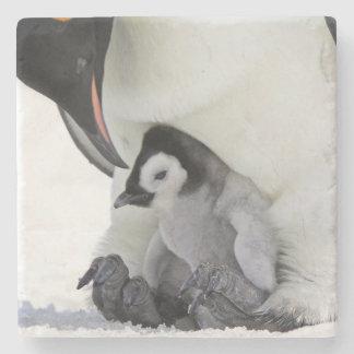 Dessous-de-verre En Pierre Île de colline de neige du pingouin d'empereur  