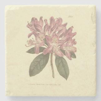 Dessous-de-verre En Pierre Illustration pourpre de rhododendron