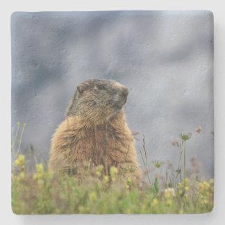 Dessous-de-verre En Pierre marmotte sur le pré alpin