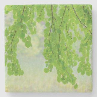 Dessous-de-verre En Pierre Membres d'arbre de Katsura dans le printemps |