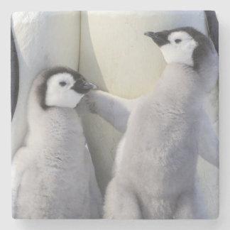 Dessous-de-verre En Pierre Poussin de pingouin d'empereur