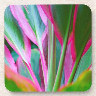 Dessous de verre en plastique durs de plante