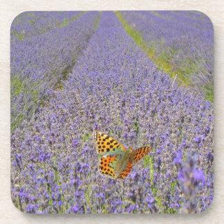 Dessous-de-verre Field of lavender - Champ de lavande.