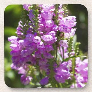 Dessous-de-verre Fleur obéissante ou fleur de dragon