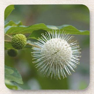 Dessous-de-verre Fleur sauvage blanc de Buttonbush