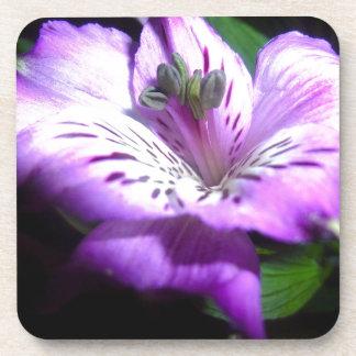 Dessous-de-verre Flora pourpre