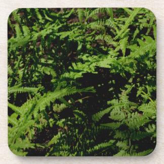 Dessous-de-verre Fougères vertes