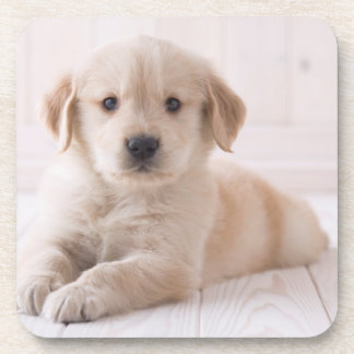 Dessous-de-verre Golden retriever se couchant