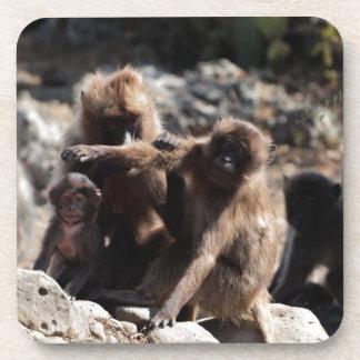 Dessous-de-verre Groupe de babouins de gelada (gelada de