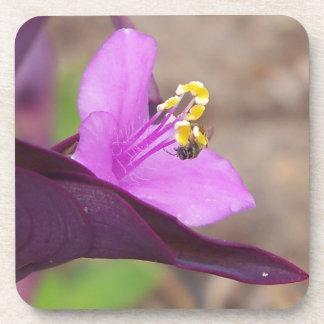 Dessous-de-verre le plante pourpre a appelé le spiderwort et une