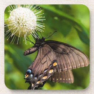 Dessous-de-verre Machaon femelle foncé de tigre sur le fleur