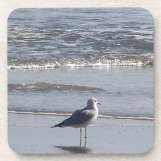 Dessous-de-verre Mouette sur la plage à marée basse sur la Côte Est