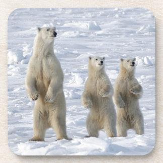 Dessous-de-verre Ours polaire