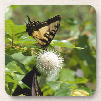 Dessous-de-verre Papillon de machaon de tigre sur le fleur sauvage