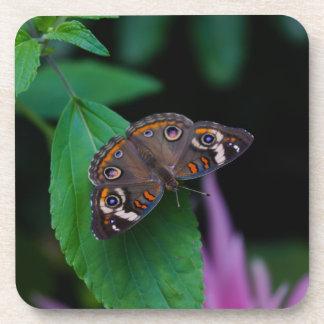 Dessous-de-verre Papillon repéré