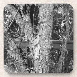 Dessous-de-verre Photo noire et blanche de nature d'arbre