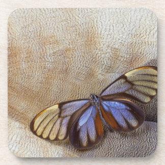 Dessous-de-verre plume égyptienne d'oie de papillon de Verre-aile
