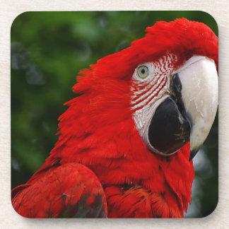 Dessous-de-verre Red Macaw