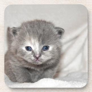 Dessous-de-verre Regardez ce petit chaton gris
